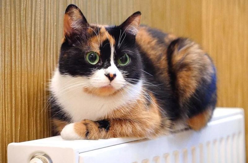 猫咪Куки 俄罗斯生活 俄罗斯 有意思的视频
