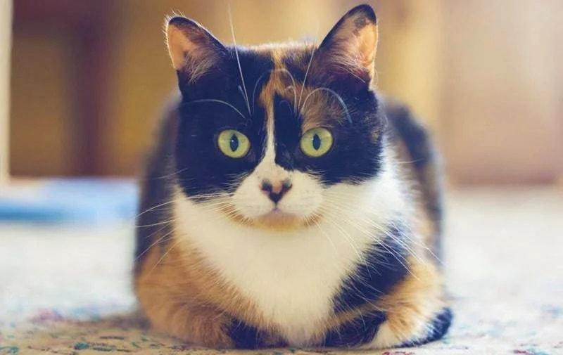 Kuki猫咪 俄罗斯生活 100卢布度过一天挑战