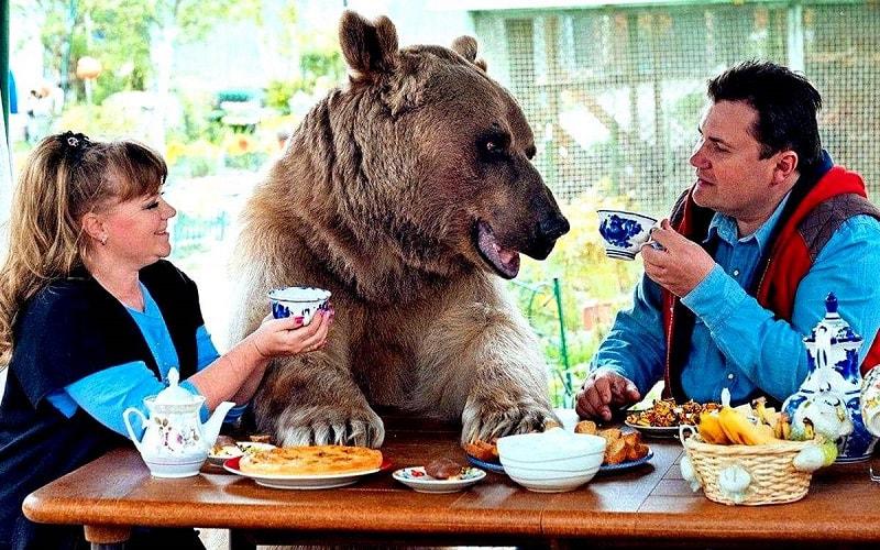 俄罗斯棕熊Стёпа 战斗民族 俄罗斯留学生活 俄罗斯生活